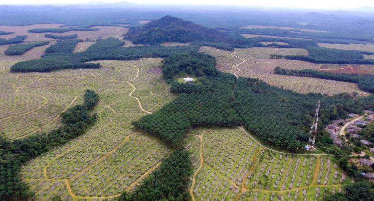 Indonesian palm oil plantation